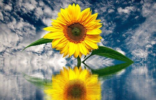 sun-flower-2548968__340